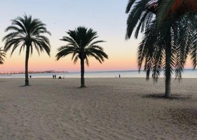 Palmbomen strand